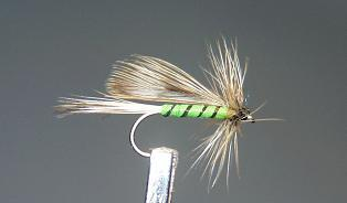 Trout Fly S23