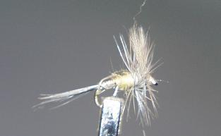Dry Fly S63