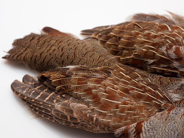English Partridge Complete Skins